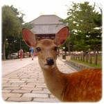 奈良燈花会の駐車場 おすすめの食事やスポットは?