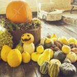 おもちゃかぼちゃ種を販売している所 プランターでの育て方は?