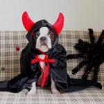 犬のハロウィンのお菓子 や イベントの衣装でおすすめは?
