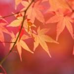 京都の貴船神社へのアクセス 紅葉観光後のランチおすすめは?
